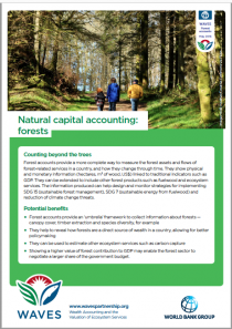 Natural Capital Accounting: Forests