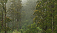 Realising the value of accounting for the forests of the Victorian Central Highlands, Australia