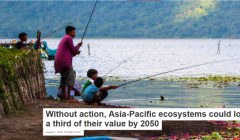 Asia-Pacific ecosystems could lose a third of their value by 2050