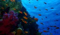 Coral reefs near Madagascar