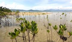 Mighty mangroves of the Philippines: Valuing wetland benefits for risk reduction and conservation